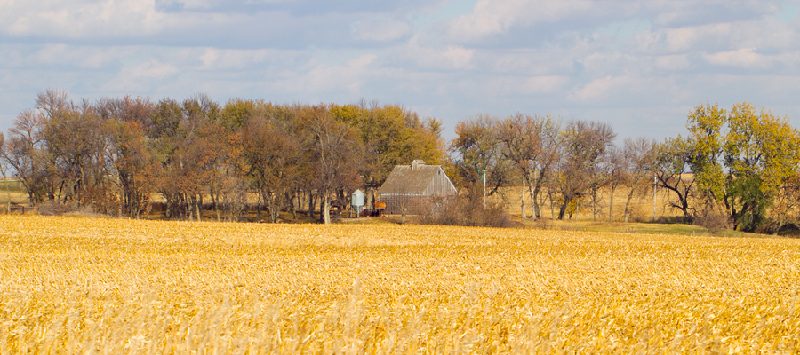 Corn crib beyond an autumn field